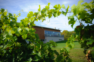 Fielding Estate Winery's lodge through grape vines
